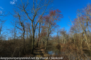 leafless trees and blue sky on trail