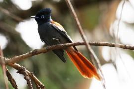 schitterende vogel