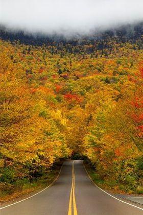 herfst in vele kleuren