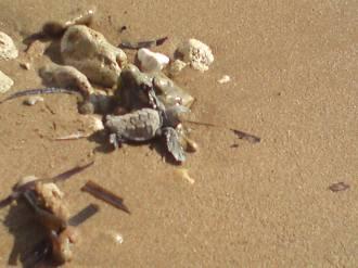 Ένα μικρό... Κεφαλονίτικο χελωνάκι