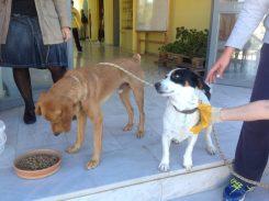 """Γύρισε """"σπίτι"""" το σκυλάκι που είχε κακοποιηθεί στις Κεραμειές"""