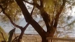 ΡΑΤΖΑΚΛΙ ... Παραλία Καμινια