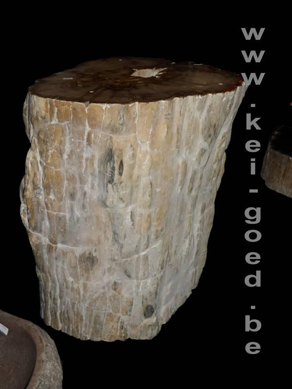 boomstamversteendfossiel te koop bij wwwkeigoedbe
