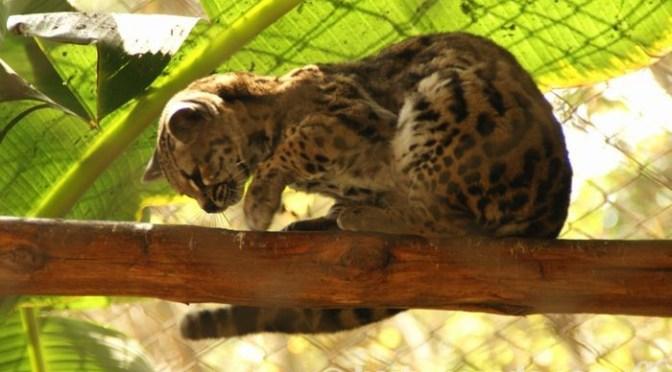 ラス・レジェンダス動物園