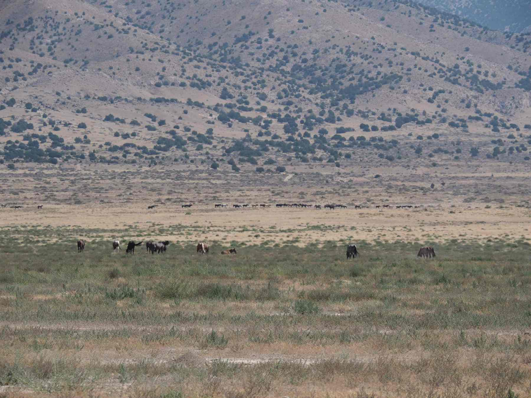 Utah Herd Management Area along the Pony Express Trail