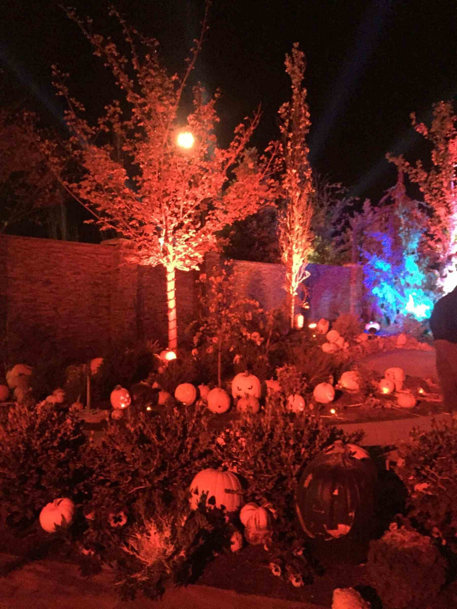 so many pumpkins- just one small area