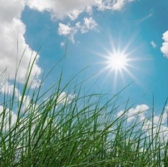 green grass and sunshine