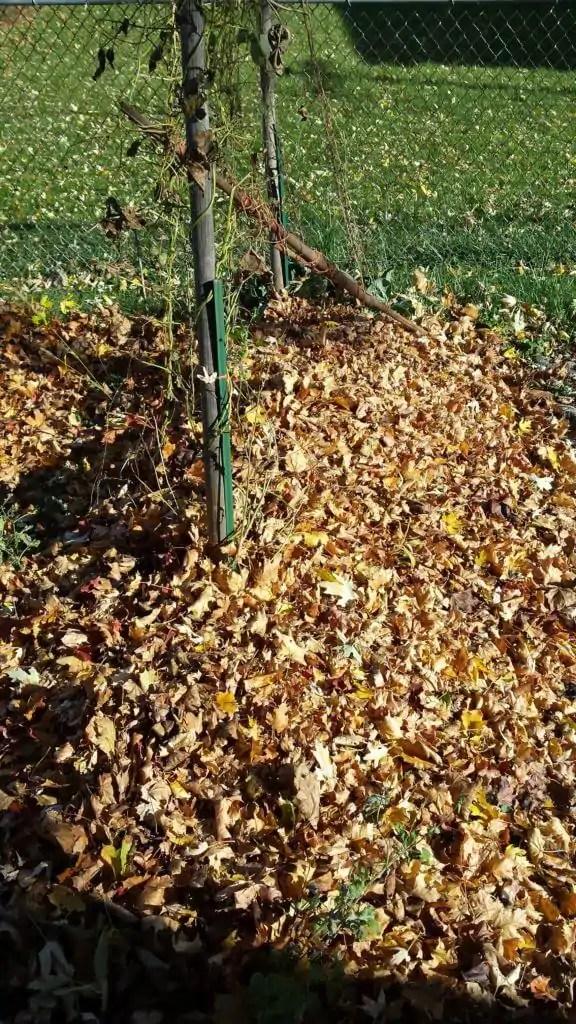 fall leaves garden kellogg