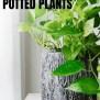5 Hard To Kill Potted Plants Kellogg Garden Organics
