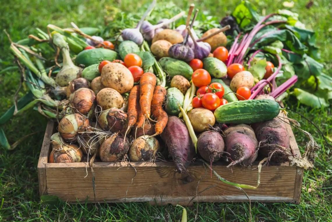 Benefits Of Growing Your Own Food Kellogg Garden Organics