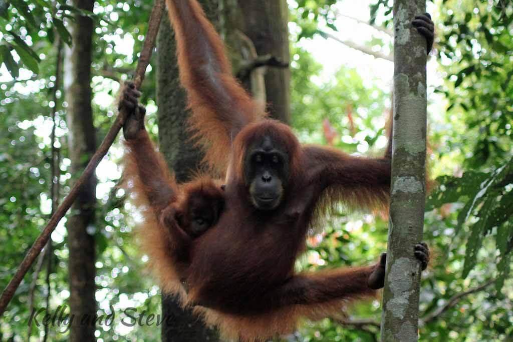Photos in Sumatra  Kelly  Steve
