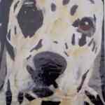 Dalmation pet portrait - water colours - Kelly Goss