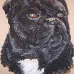 Staffordshire bull terrier pet portrait - Kelly Goss