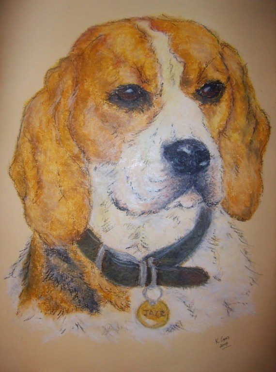 Beagle dog pet portrait - oil pastels - Kelly Goss