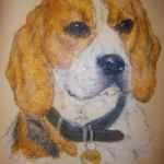 Beagle dog pet portrait - oil pastels - Kelly Goss