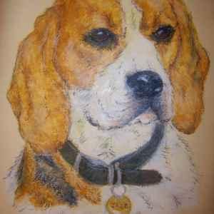 Pet Portrait Art for sale