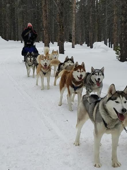Breckenridge Vacation Dog Sledding in Colorado