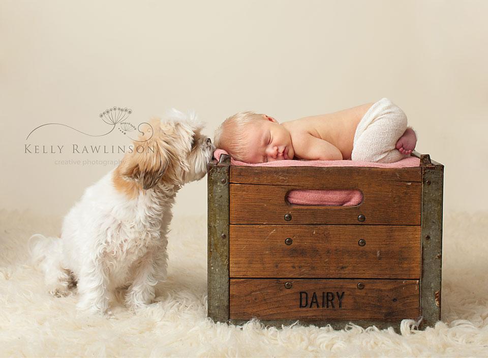 newborn-with-dog-ShihTzu