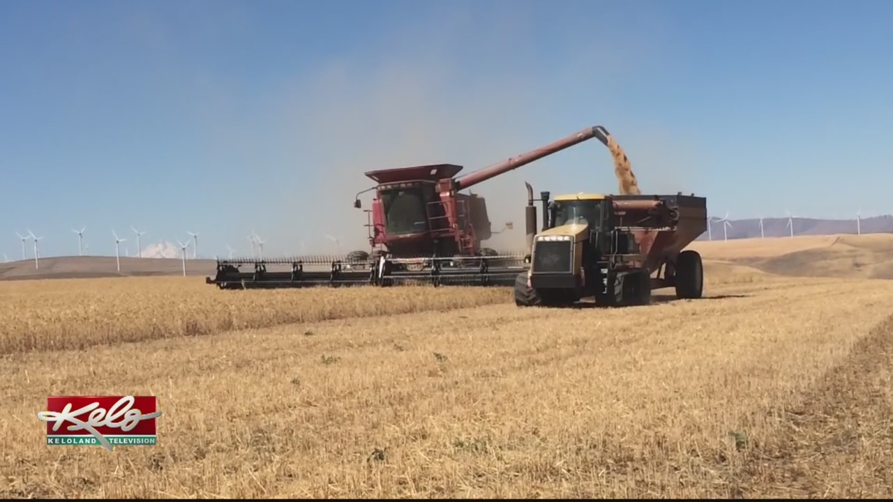 Wheat_Tariffs_Could_Have_Devastating_Aff_0_20180721230933