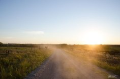 cow-road-dust-kansas-sunset-mcnickle
