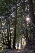 forest-redwood-dancer-pose-kmcnickle