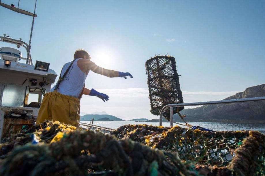 keltic seafare creel fishing for Langoustine