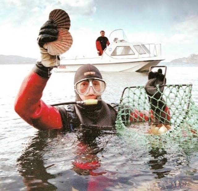 Diving for Live Scallops