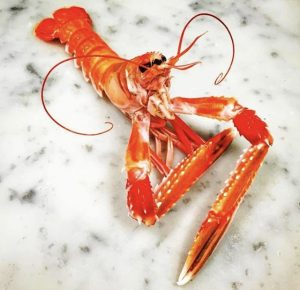 A langoustine in a pose