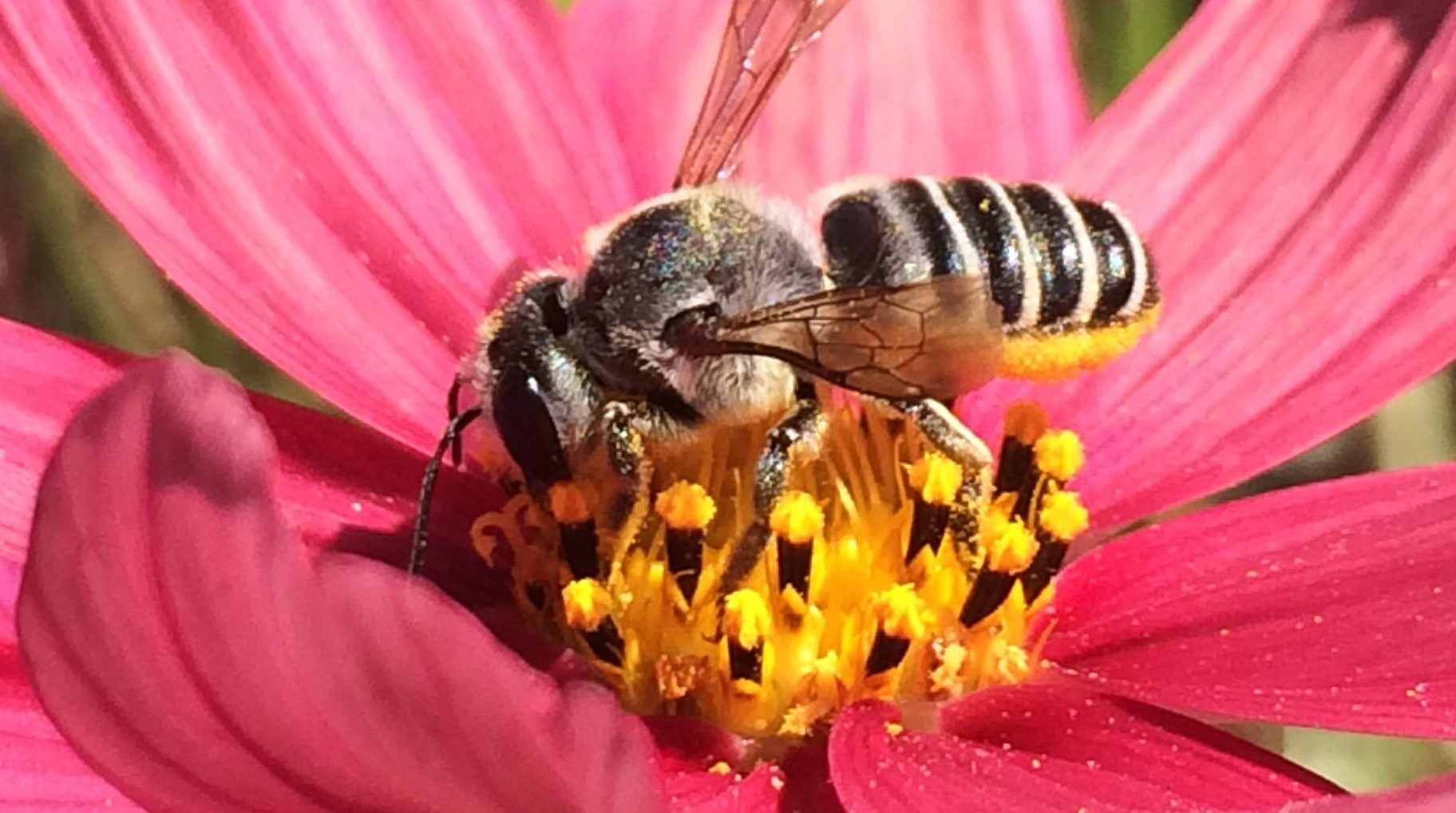 tax deductions for bees eyesonhives