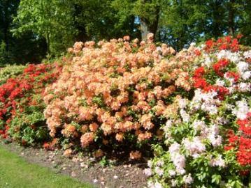 Taman Rhododendron Bremen