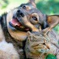 Preventing_Falls_Pets