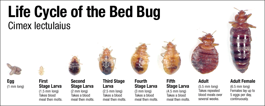 Natinal Geographic Bed Bugs