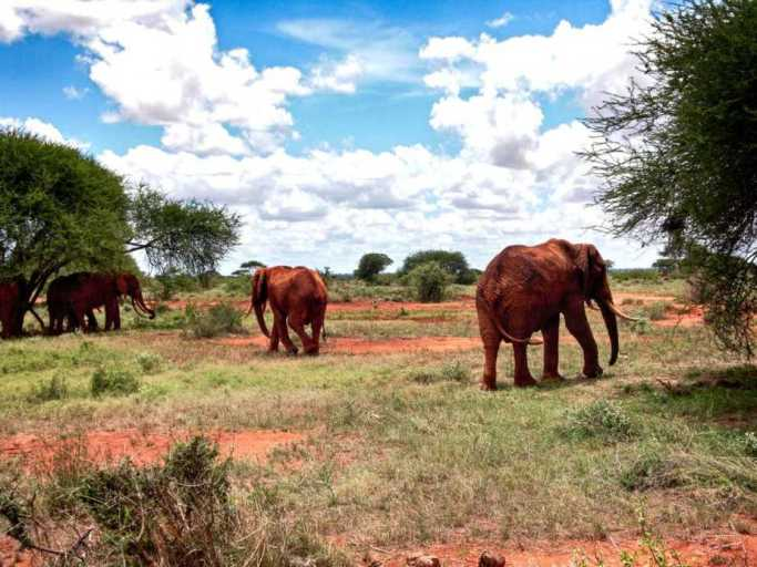 kenia-afrika-reise-bilder-095