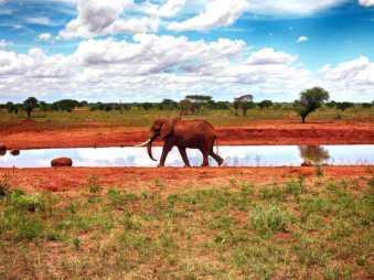 kenia-afrika-reise-bilder-111