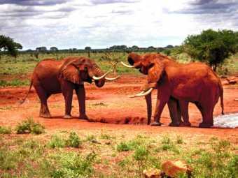 kenia-afrika-reise-bilder-115