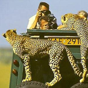 Geparden - Kenia safari Kenia reisefuehrer für mit reisetipp für familien reisen.
