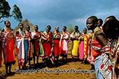 Massai Hochzeit - kenia safari tsavo amboseli 4 tage privat ab Diani beach