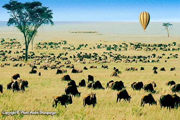 Great tour - Tansania reise urlaub safaris tour