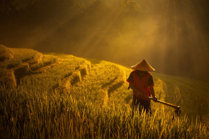 Image result for farms in asia photography