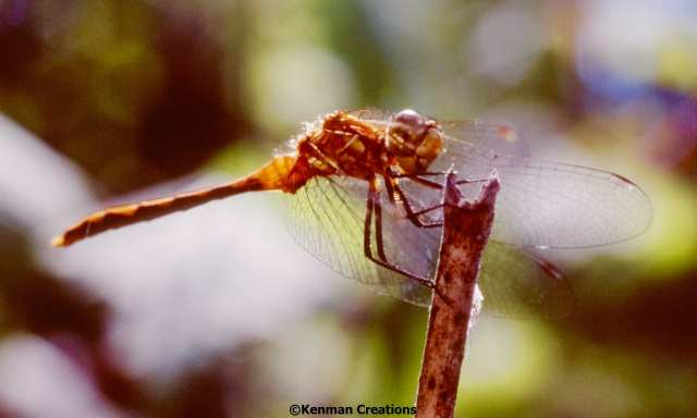 Dragonfly Dry