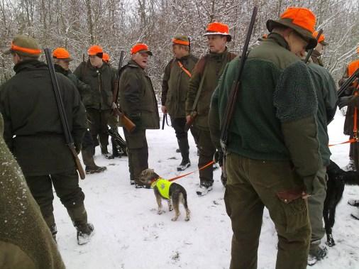 Border Terrier Kimmie på jagt, hundelivet hos Kennel Hjelme