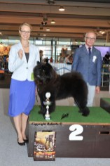 Kennel Hjelmes Chow Chow bedst i gruppen 2 i Bremen dag to 2013. Piuk Chow Possesses Black Passion