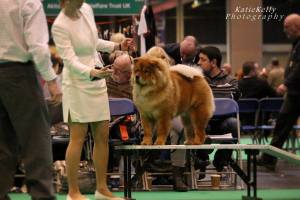 Kennel Hjelmes Chow Chow Bao-Fang's Hong-Se Yue-Liang Crufts 2015, rampebedømmelse