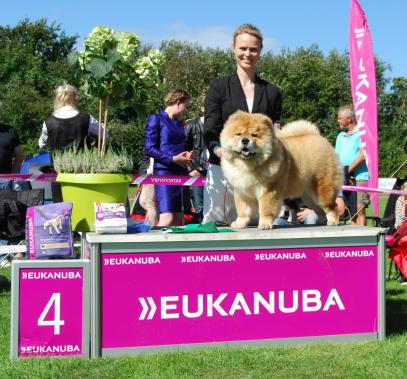 Kennel Hjelme Chow Chow Piuk Chow Sweet Magic Of Phantasy BIS4 hvalp Bornholm 2016