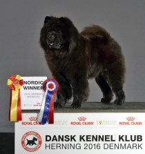 Kennel Hjelme Chow Chow Piuk_Chow_Possesses_Black_Passion Nordisk Vinder 2016