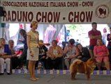 Chow Chow Kennel Hjelme Bao-Fang's Hong-Se Yue-Liang og Stine Hjelme