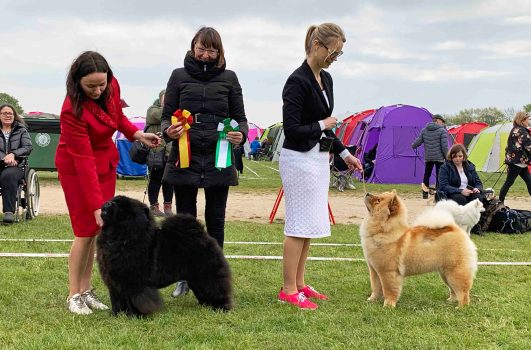 Chow Chow Hjelme China In Your Hand, Stine Hjelme og Gabriela Richard