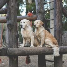 Adventure park dogs