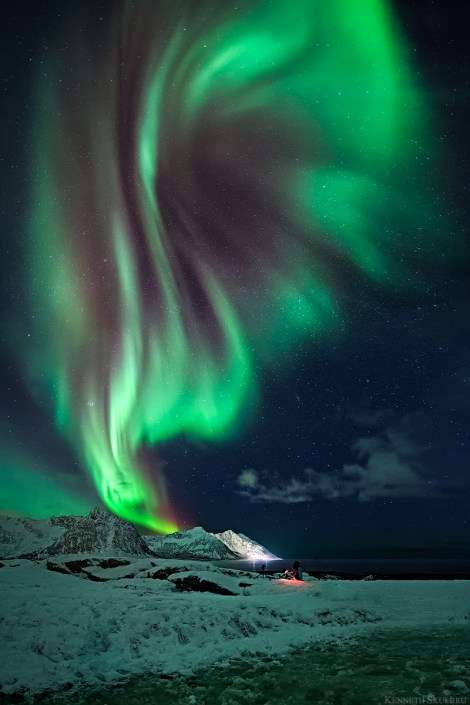 aurora flower