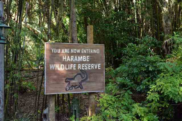 Details for Kilimanjaro Safaris after dark
